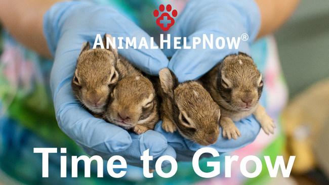 Video thumbnail, credit Austin Wildlife Rescue