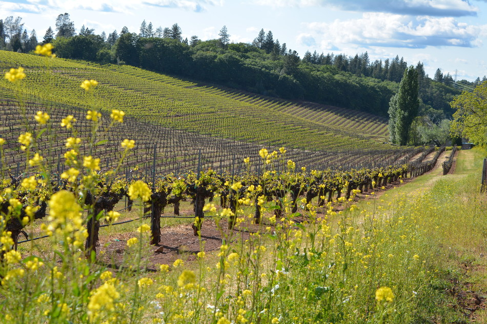 The Sierra Foothills have more than 200 wineries where visitors can find mountain vineyards and a diverse range of wine varieties grown near historic Gold Rush towns and spectacular national parks and wilderness areas. Photo credit Lava Cap Vineyard.