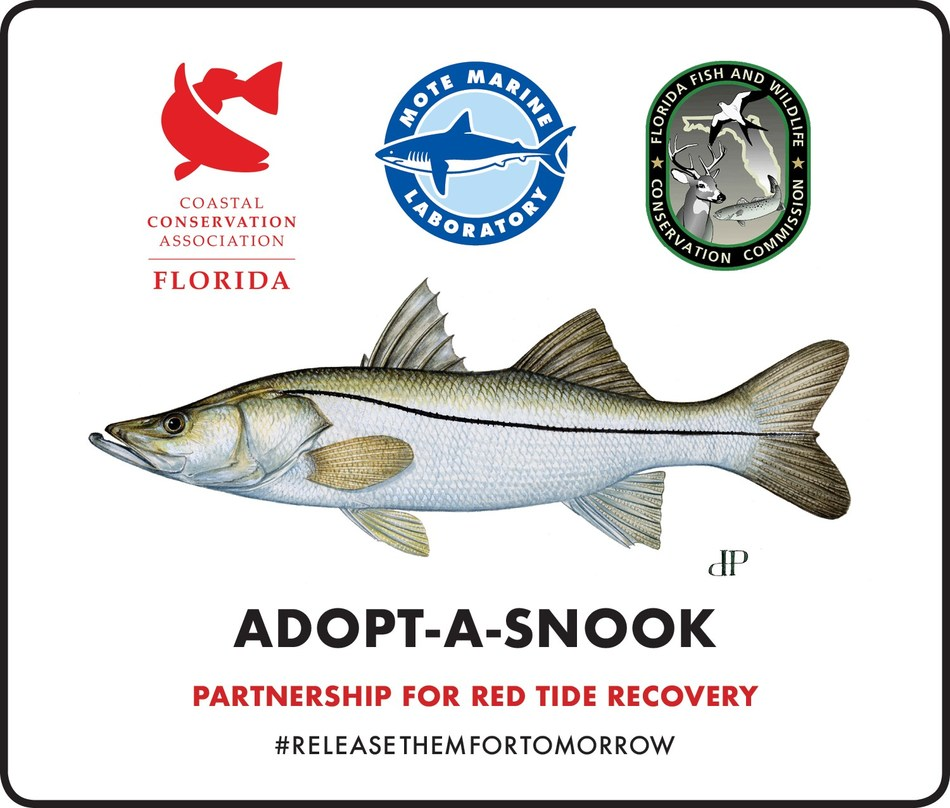 The renewed Adopt-A-Snook program allows anglers and businesses the opportunity to join in the rebuilding efforts. Donors will receive an adoption certificate including the tag number and release location for their adopted juvenile snook after all releases are completed, as well as updates on their fish based on the data collected from the PIT tags.