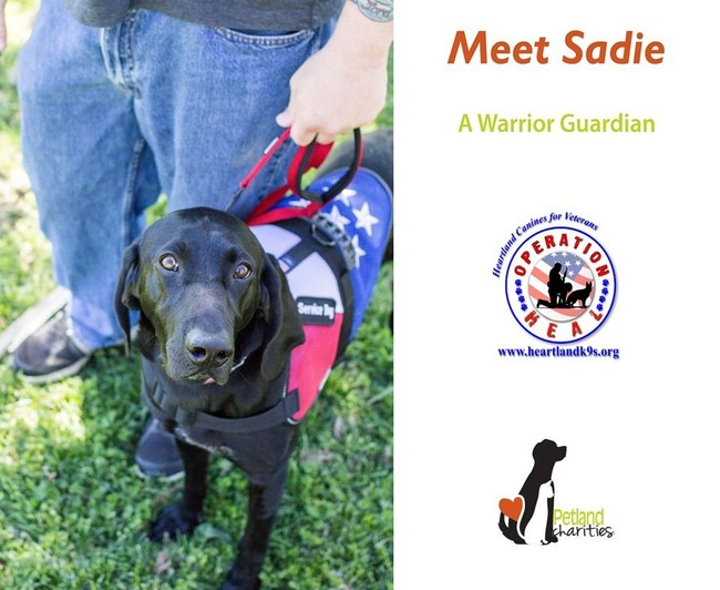 One of Heartland Canines for Veterans' graduates, Sadie.