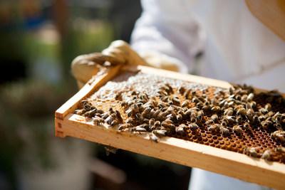 费尔蒙酒店及度假村推出蜜蜂可持续计划 | 大发时时彩