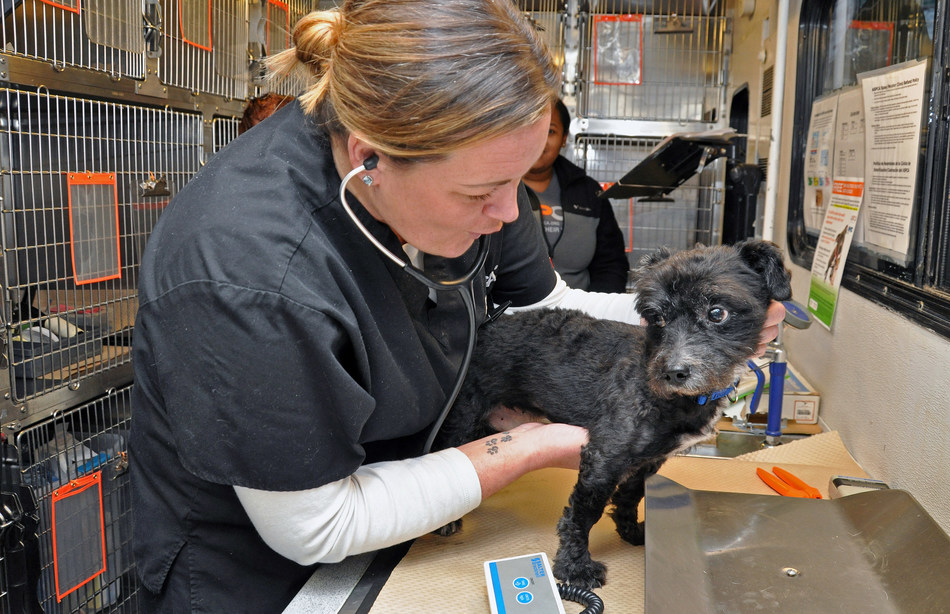 Dr. Kimberly Sarter of the ASPCA examines a dog on the ASPCA's Primary Pet Care vehicle