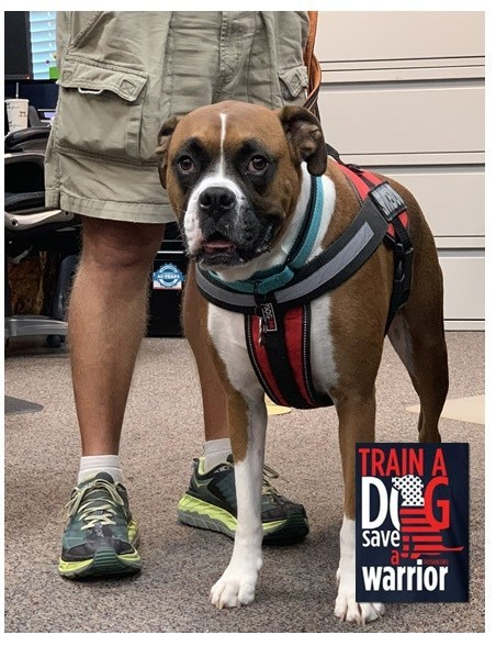 Nick, TADSAW canine ambassador is one of the more than 1,000 service animals deployed through TADSAW at no cost to the veterans who train with them. Vantagepoint's donation will help underwrite the cost of service animal certification training.