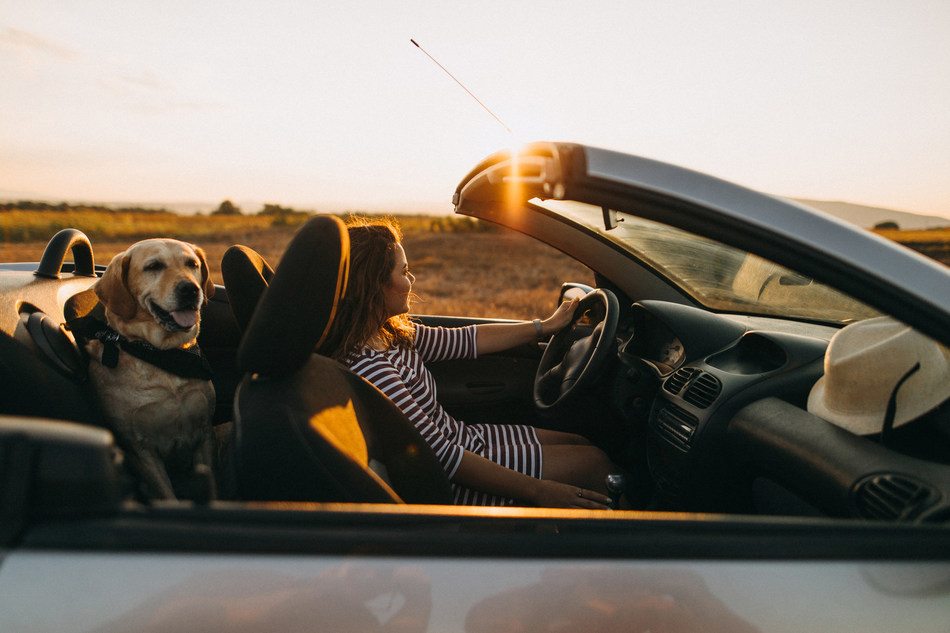A new interactive road trip map from Orbitz ranks the seven most pet-friendly trips to plan this summer.
