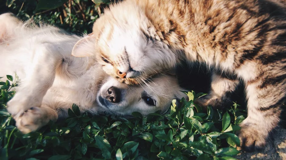 Osteoarthritis can subject your dog or cat to a lifetime of pain. (CNW Group/Canadian Animal Health Institute)
