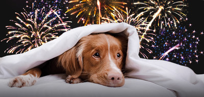 Independence Day may be fun for us, but for pets it can be frightening and even dangerous.