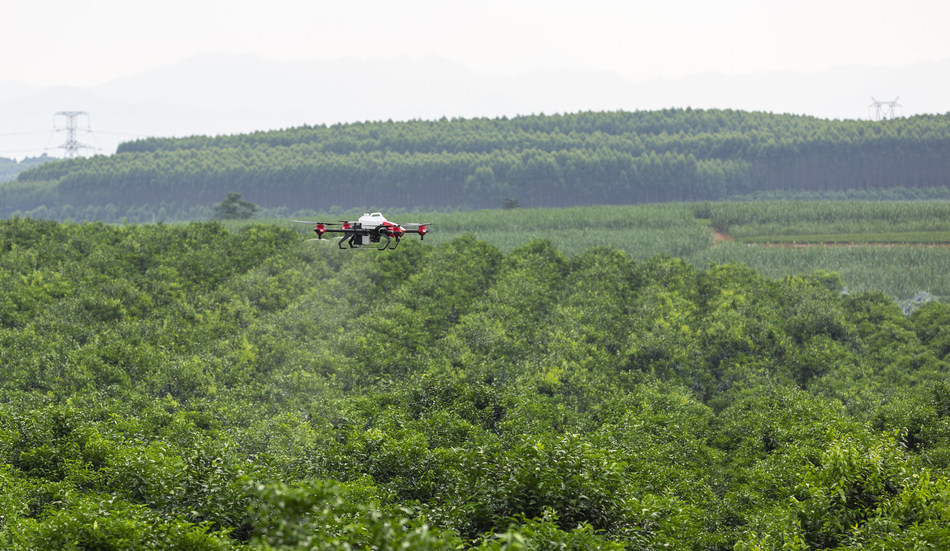 XAG Adopts AI Technology in Fruit Tree Identifying and Spraying