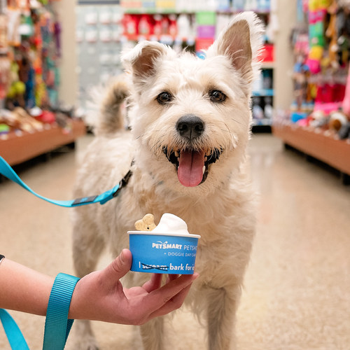 National Ice Cream Day is Sunday, July 21, and PetSmart is celebrating all weekend long by offering free dog-friendly ice cream at its PetSmart PetsHotel locations across North America. All day during store hours on Saturday, July 20, and Sunday, July 21, dogs can get a four-ounce, complimentary serving of dog-safe ice cream at PetSmart stores with PetsHotel facilities. This frozen treat is customarily offered as an add-on treat service at Doggie Day Camp and during overnight stays.