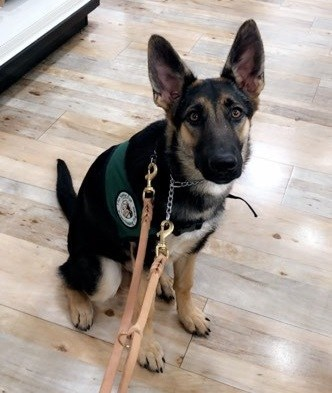 Ondrea, the missing Seeing Eye puppy is a 14-month-old German shepherd. The Seeing Eye is offering a $5,000 reward for information leading to her safe return. Tips can be called into 973-525-1084.