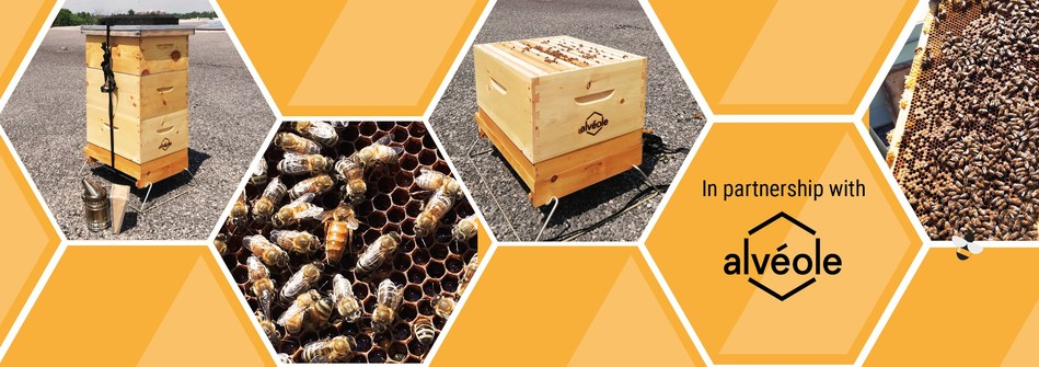 Pictures of the hives and bees located at 2200 Walkley Road, in Ottawa. (CNW Group/BTB Real Estate Investment Trust)