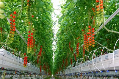Qingyun sets the bar for modern Chinese agricultural development