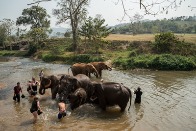 Tourists bathing elephants. Credit: World Animal Protection / Nick Axelrod