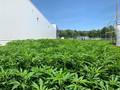 First crop of plants at Aurora Eau, in Lachute, Quebec (CNW Group/Aurora Cannabis Inc.)