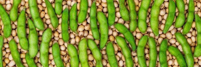 Transparency, smarter seeds and taste are key factors in better-for-you soy products