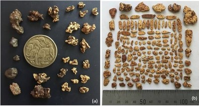 Figure 3: (a) gold nuggets collected in the Hawk area considered to be 'close to source' based on the sharp or hackly texture of the nuggets, (b) Nuggets from the Conglomerate/Hamburger area flattened and pitted texture. The photographs are of a selected sample and are not representative of mineralization that is hosted on the property. (CNW Group/NxGold Ltd.)