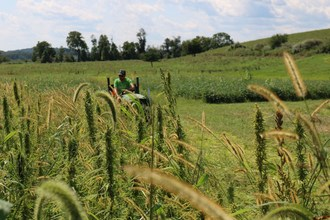 Photo: Hemp growing at Rodale Institute, a global leader of regenerative organic agriculture, in Kutztown, PA. 2019 marks Rodale Institute's third year of industrial hemp research. (CNW Group/Charlotte's Web Holdings, Inc.)