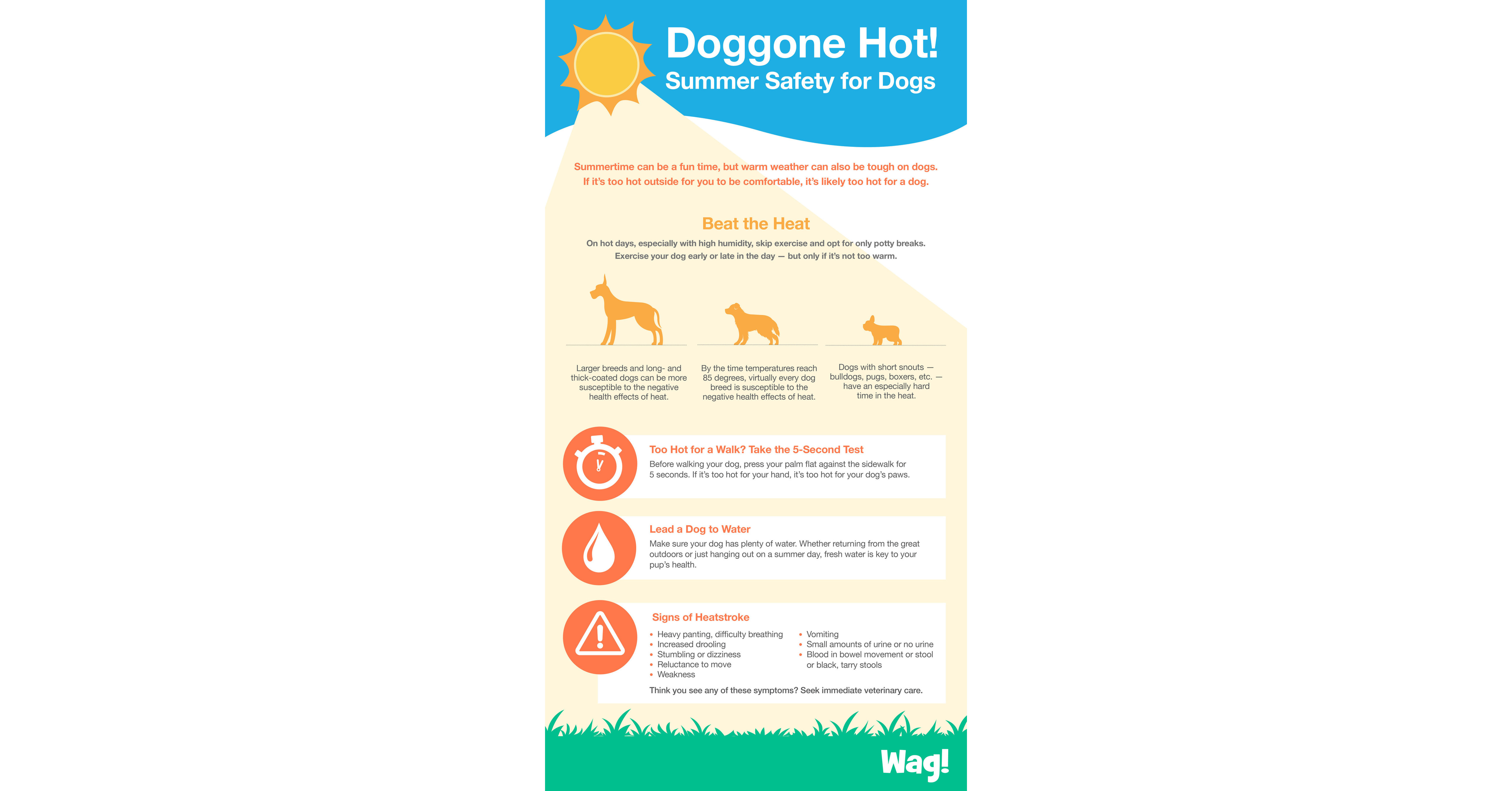 Wag Provides Safety Tips To Help Pet Parents Protect Their Dogs From The Dangers Of Hot Temperatures