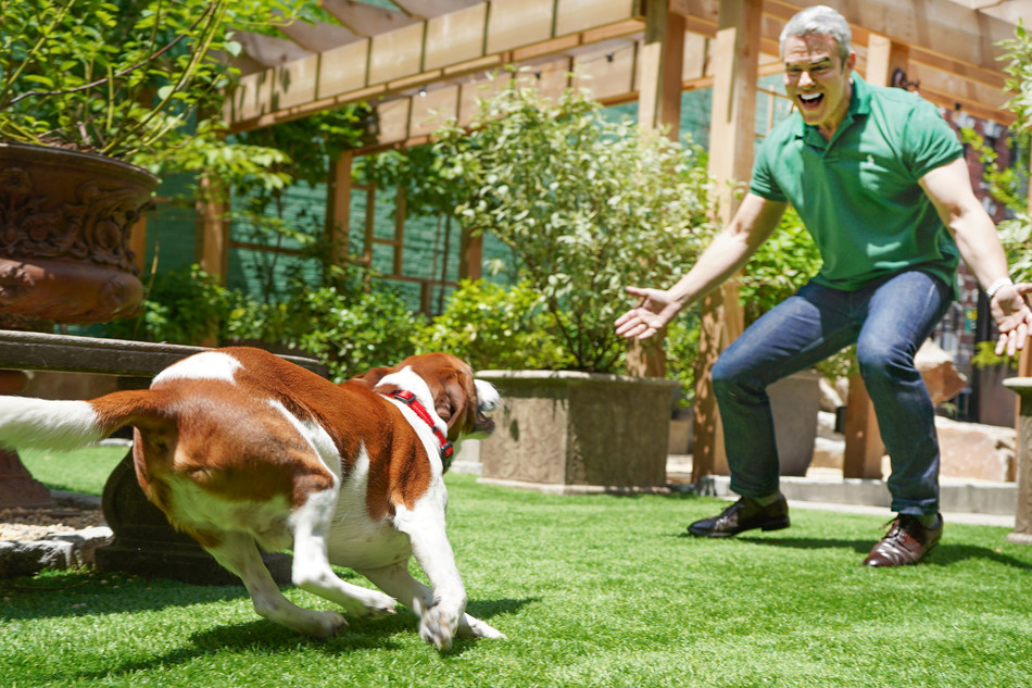Andy Cohen and Purina ONE® team up to bring awareness of senior dog care after a recent survey from the brand showed 83 percent of senior dog owners do not know when a dog is considered a senior.