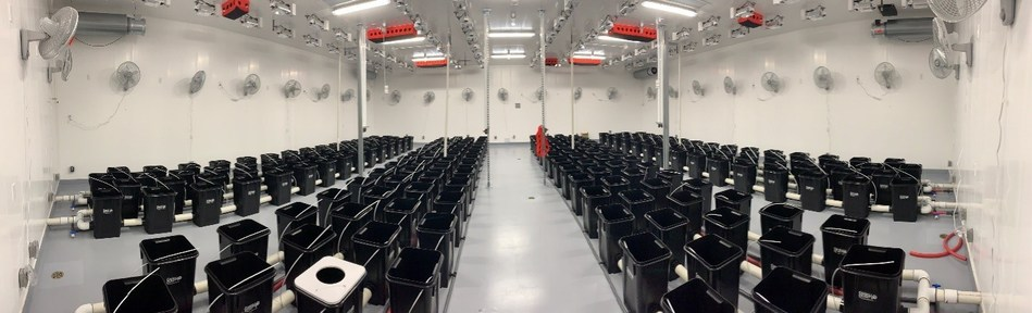 Pictured above, one of five additional flower room at Radicle Medical Marijuana Inc. state-of-the-art indoor facility. July 31, 2019 (CNW Group/Radicle Cannabis)
