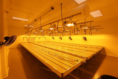 Edd Helms Group & growOPTIMUM control the lighting type, lighting hours, and lighting distance from plants. We know the grow.