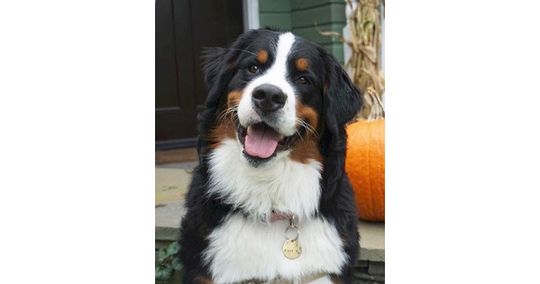 The American Kennel Club Celebrates 1 Million Dogs Passing