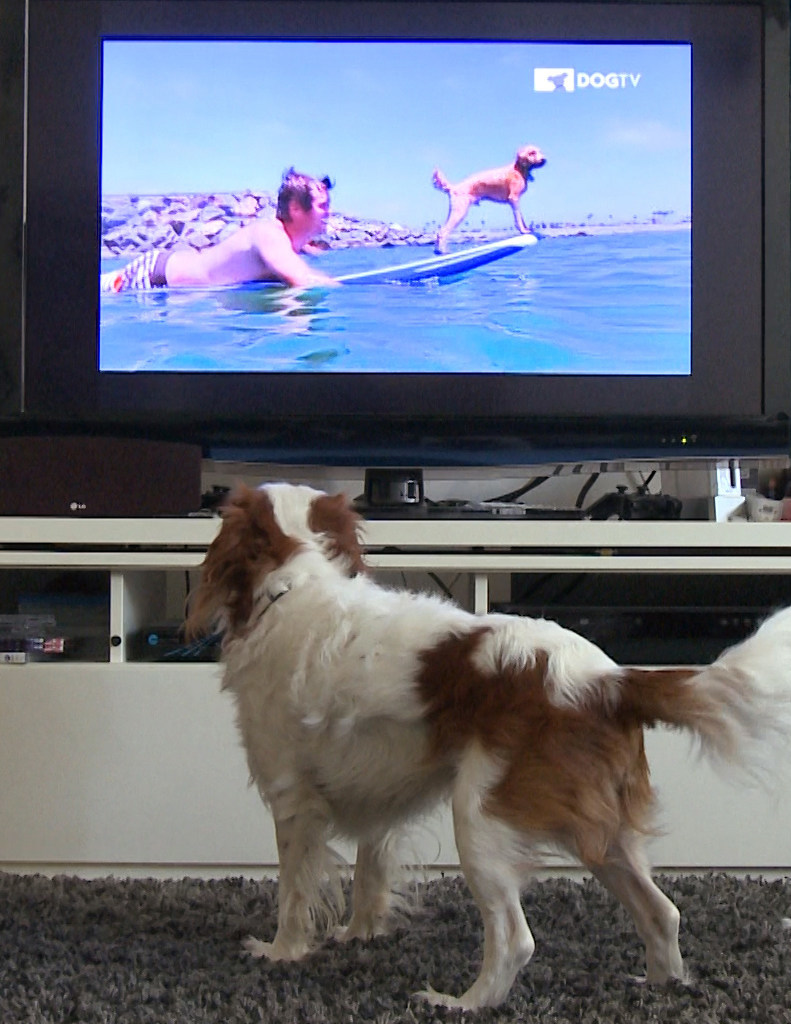 Canines All Around The World Have Spoken    And DOGTV Has