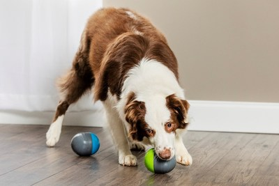 Give your dog a new type of challenging toy with the PetSafe® Ricochet Electronic Dog Toy. As your dog plays with one of the interactive paired toys, a fun and exciting squeak sound is heard from the other toy. When your furry friend investigates the second toy, the sound bounces back to the first toy. You dog will love trying to find the squeaky sound.