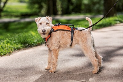 New PetSafe® Walk Alongtm Outdoor Harness Makes Adventures with Furry Friends Easy