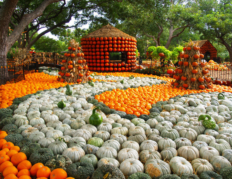 "Autumn at the Arboretum Fall Festival Highlights ""It's The Great Pumpkin, Charlie Brown"" Theme with 90,000 Pumpkins, Gourds and Squash. The festival runs from September 21 to October 31, 2019."