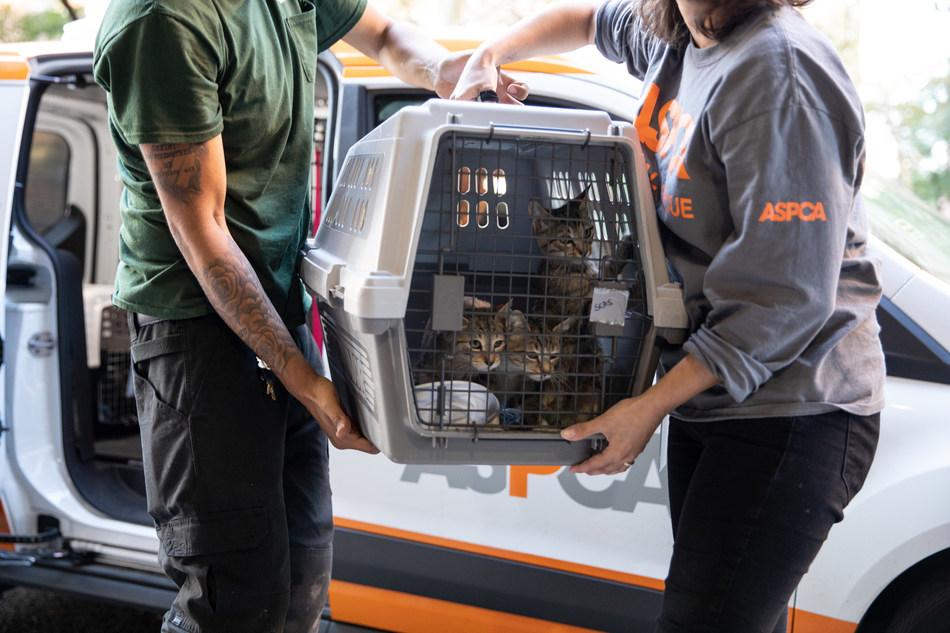Evacuated animals arriving at the ASPCA Adoption Center