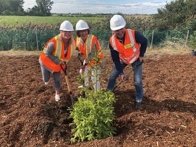Le ministre François Bonnardel, la ministre Caroline Proulx et la députée Lise Lavallée procèdent à une plantation d'arbres aux abords de l'autoroute 40 (Groupe CNW/Cabinet du ministre des Transports)