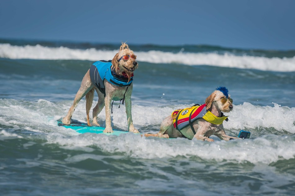 Freestyle Surf Dog Pros Teddy and Derby - Helen Woodward Animal Center's 14th Annual Surf Dog Surf-A-Thon, sponsored by Blue Buffalo, September 8th, 2019.  (Photo credit: Charmaine Gray Photography)
