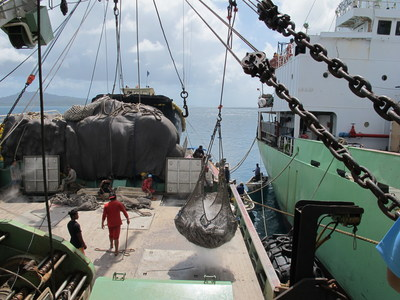 Report Finds Transshipments in Western, Central Pacific Likely Underreported