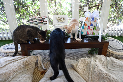 Adoptable cats celebrated the donation of over $500,000 worth of Fancy Feast APPETIZERS to shelters across the country with a 'Garden Party.' Cats attending the feline fête are all currently available for adoption through the spcaLA.