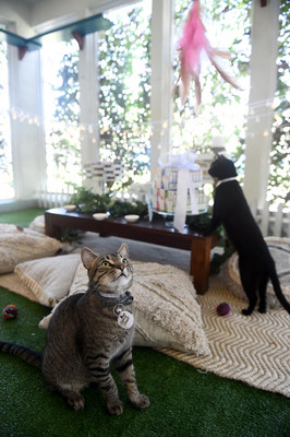 Adoptable cats Brunelo and Destin at the spcaLA celebrated the donation of over $500,000 worth of Fancy Feast with a 'Garden Party.' Attendees enjoyed delicious Fancy Feast APPETIZERS while playing with other guests.