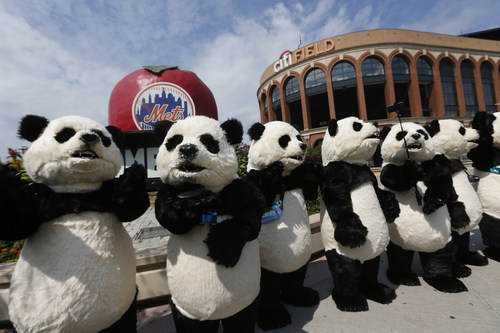 A group of traveling pandas arrive at Citi Field before a press conference announcing the first-ever Hello Panda Festival, which will illuminate the upcoming holiday season, Monday, Sept. 9, 2019 in New York. Produced by China Performing Arts Agency North America, the Hello Panda Festival will be the largest lantern arts festival in North America running from Dec. 6, 2019 to Jan. 26, 2020. (Jason DeCrow/AP Images for China Performing Arts Agency North America)