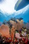 La comunidad de buceo de las Islas de la Bahía lidera el camino hacia la responsabilidad ambiental marina