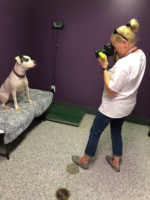Tonya Sheetz, a Crane Family Housing volunteer photographing a pet up for adoption.