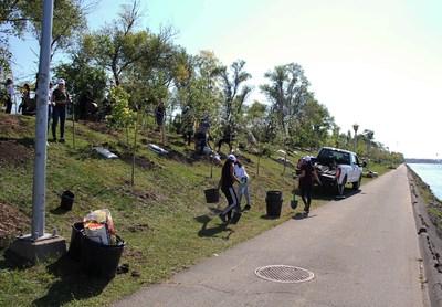 La plantation s'est faite par une équipe bénévole du Victoria Park Health Club le samedi 21 septembre  | Société du parc Jean-Drapeau (Groupe CNW/SOCIETE DU PARC JEAN-DRAPEAU)